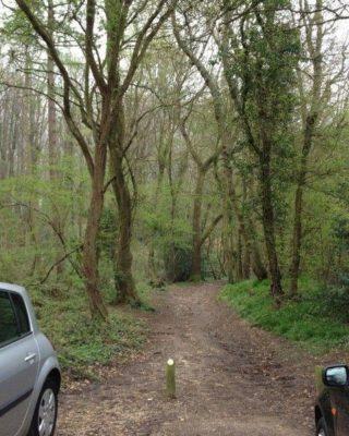 Dog walk at Stoke Park Wood