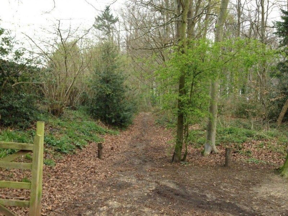 Stoke Park Wood large photo 3