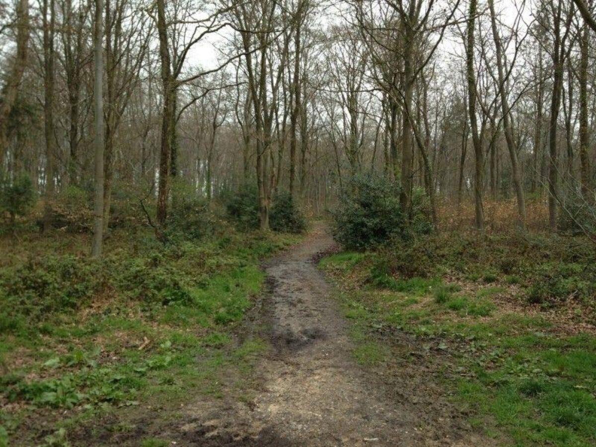 Stoke Park Wood large photo 4