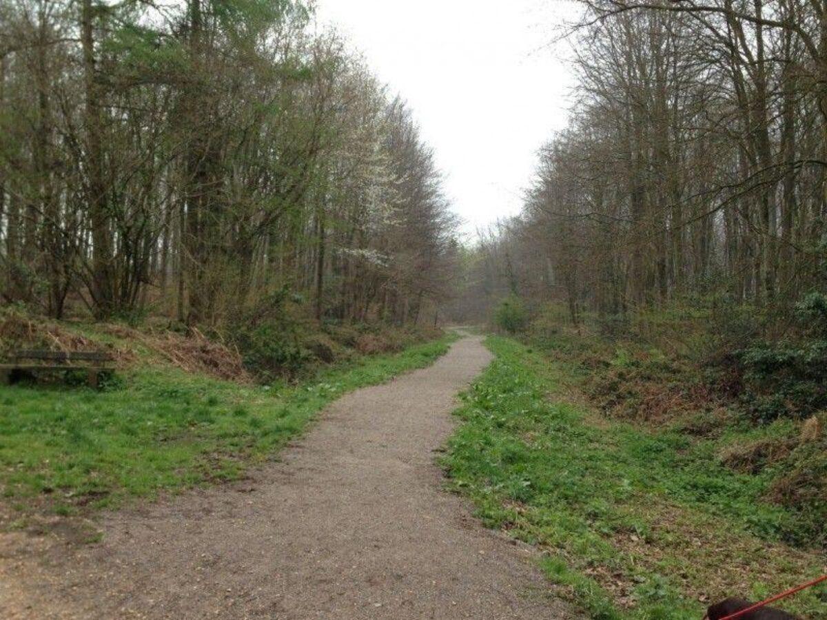 Stoke Park Wood large photo 6