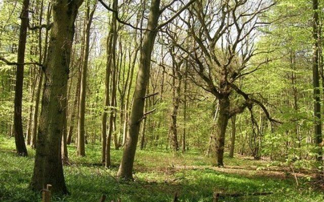 Stoke Wood Dog walk in Oxfordshire