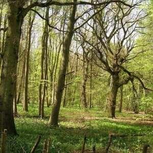 Stoke Wood