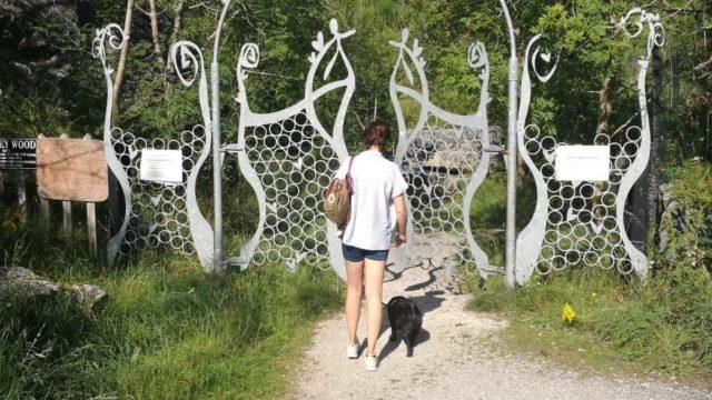 Dog walk at Stoney Wood