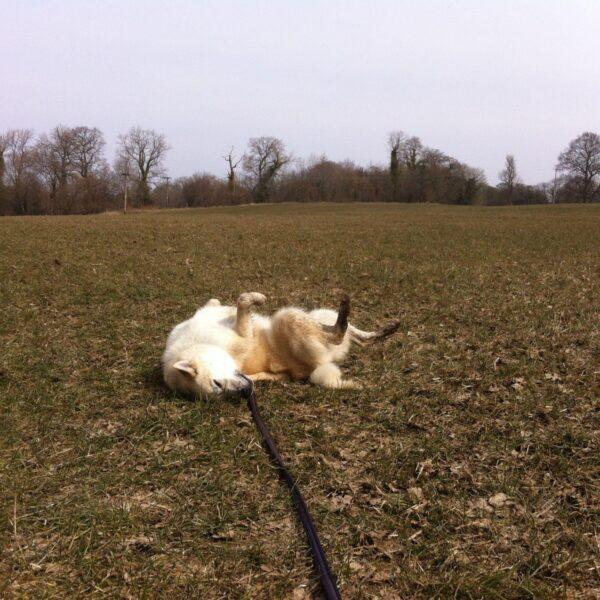 Dog walk at Styal Park / Bollin Trail