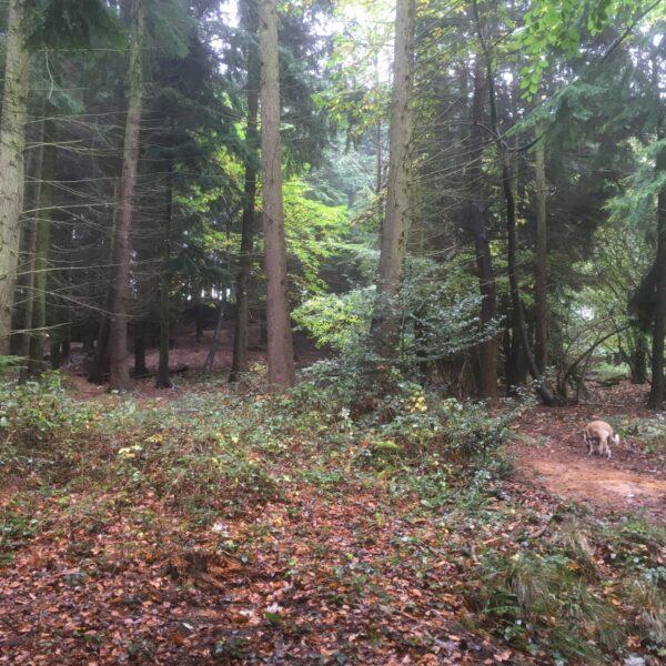 Dog walk at Sulham Woods