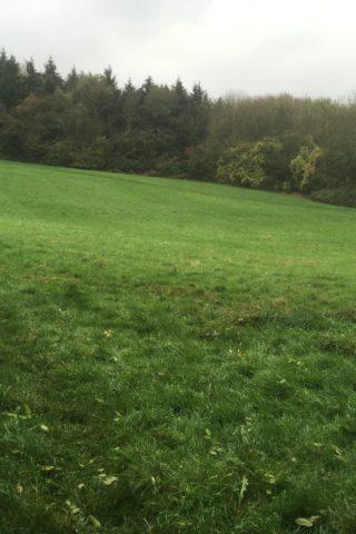 Dog walk at Sulham Woods photo