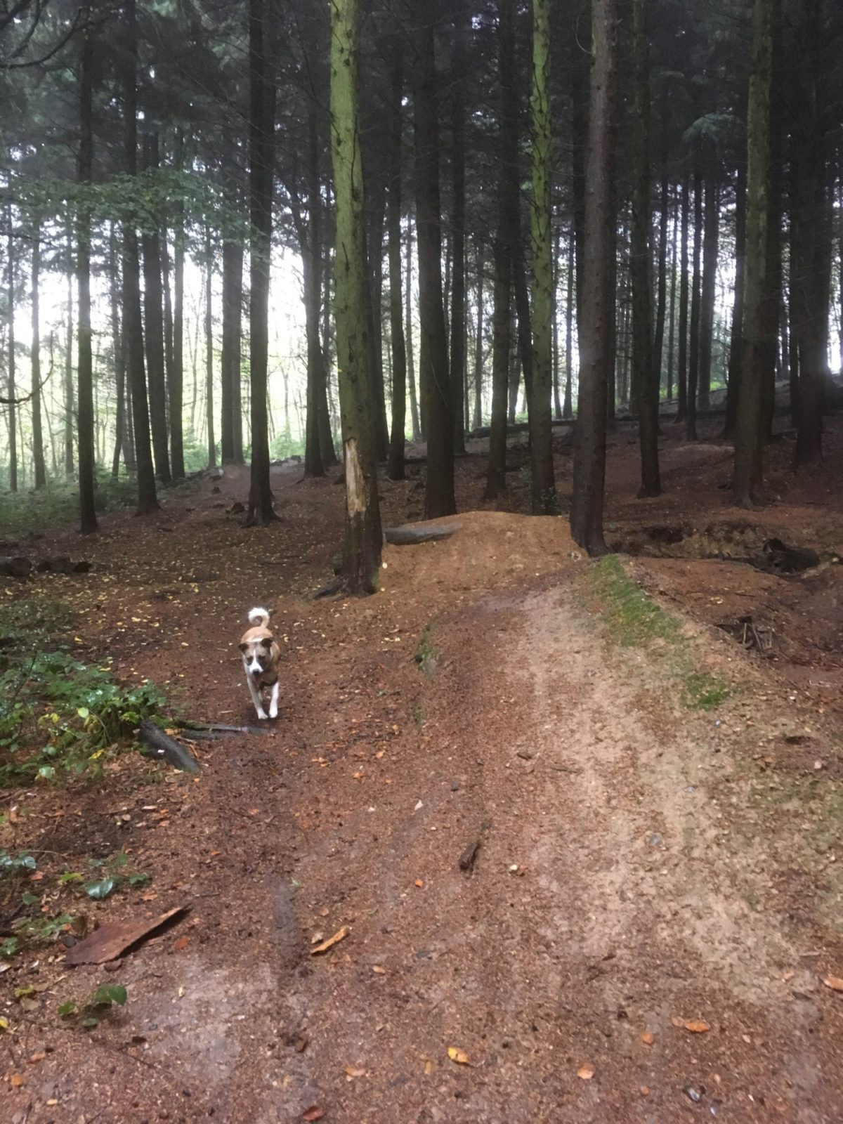 Sulham Woods large photo 3