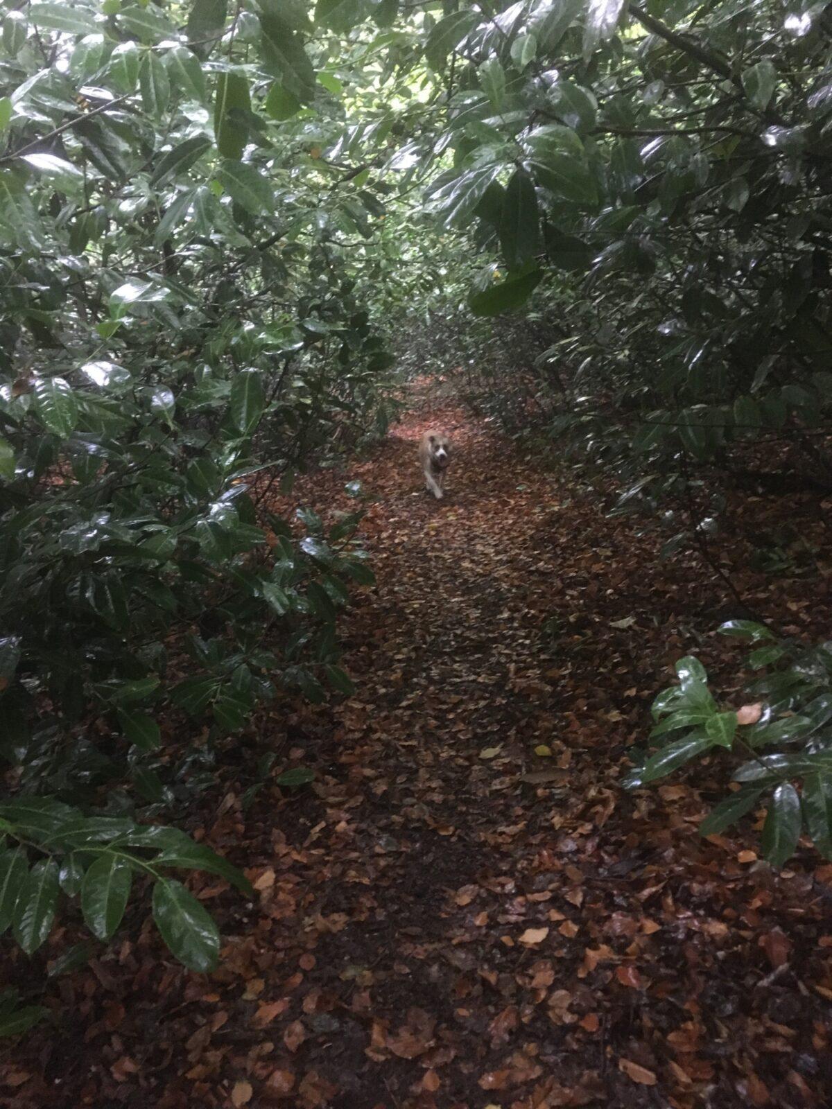 Sulham Woods large photo 4