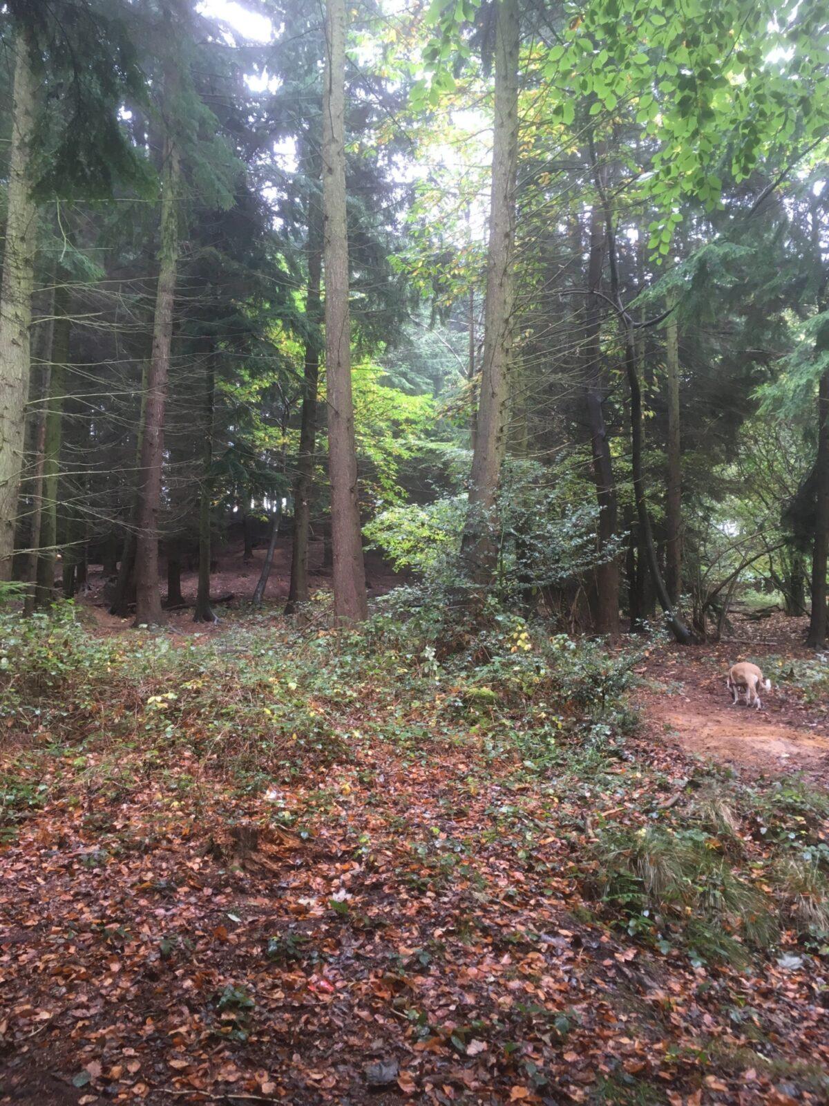 Sulham Woods large photo 5