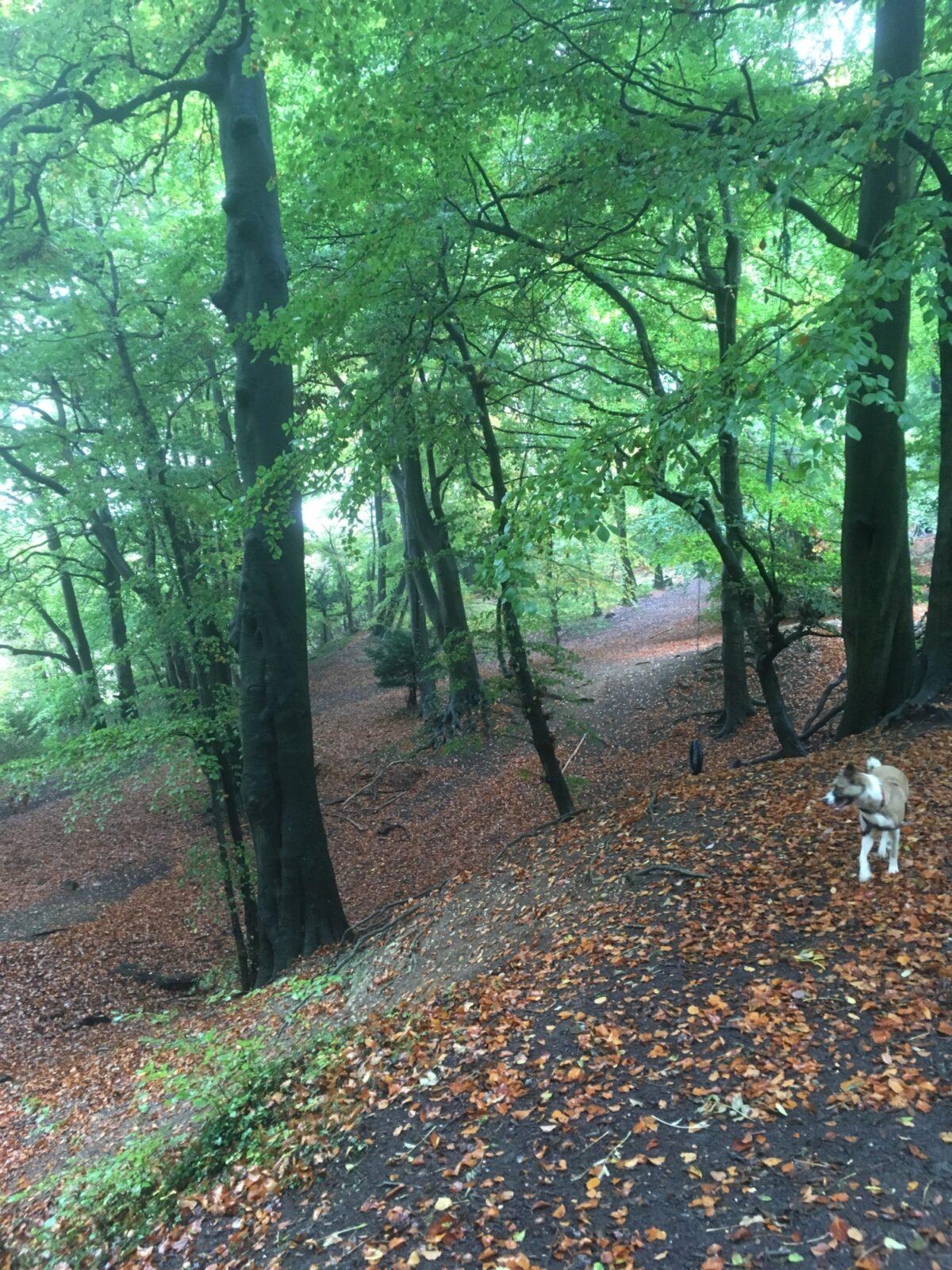 Sulham Woods large photo 6