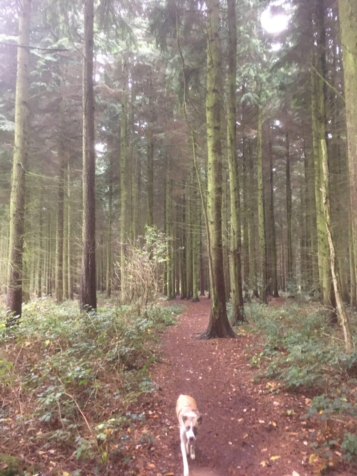 Sulham Woods large photo 8