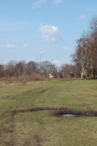 Dog walk at Sutton Park photo