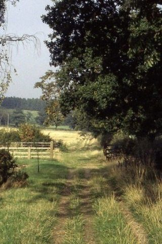 Dog walk at Swithland Woods To Rabbits Bridge And Beyond photo