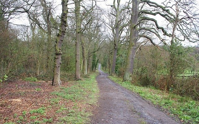 Swithland Woods To Rabbits Bridge And Beyond Dog walk in Leicestershire