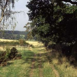 Swithland Woods To Rabbits Bridge And Beyond