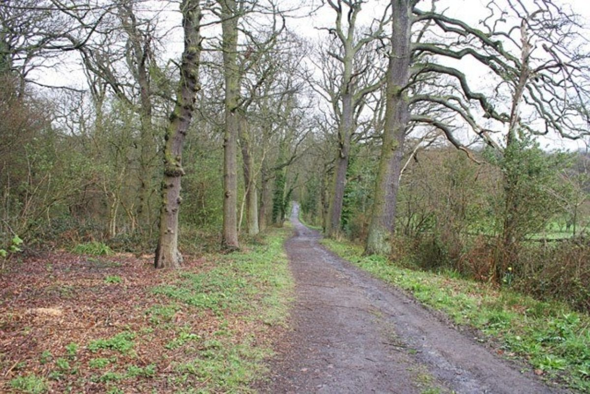 Swithland Woods To Rabbits Bridge And Beyond large photo 2
