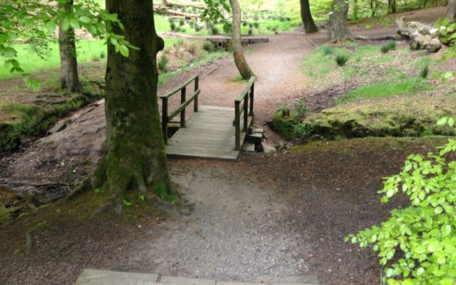 Tandle Hill National Park Dog walk in Lancashire