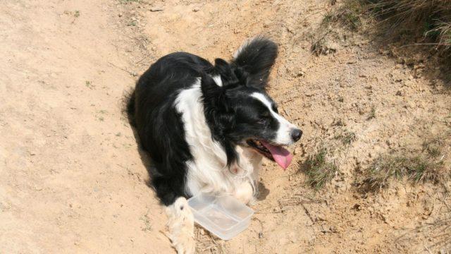 Dog walk at Teesmouth Beach