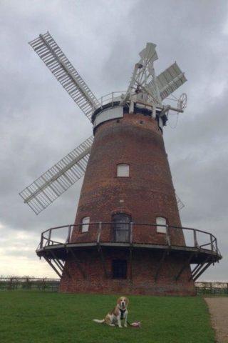 Dog walk at Thaxted Windmill photo