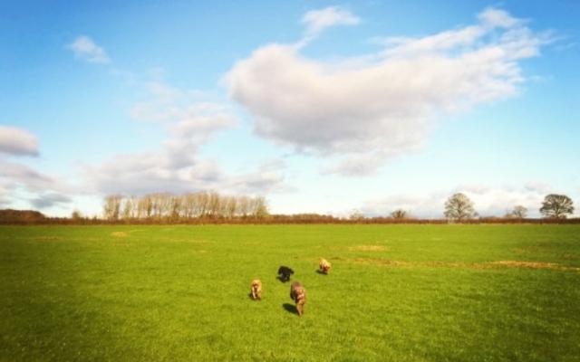 The Avenue Dog walk in Wiltshire