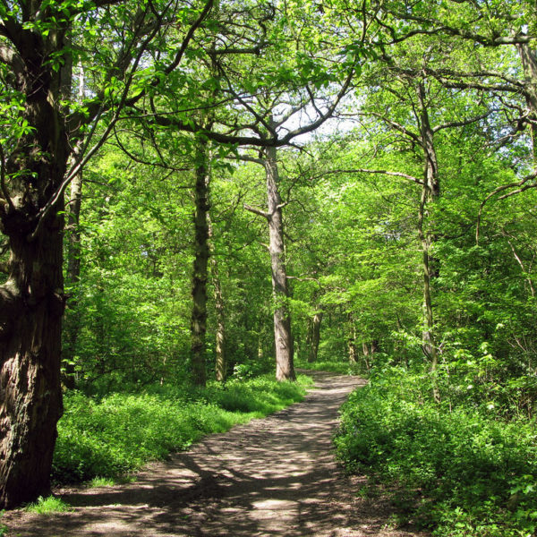 The Canley Woodlands (Park Wood & Ten Shilling Wood) photo 1