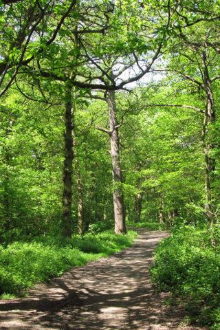 Dog walk at The Canley Woodlands (Park Wood & Ten Shilling Wood) photo