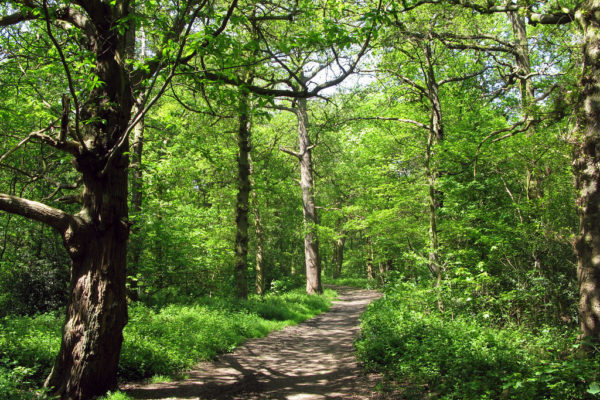 The Canley Woodlands (Park Wood & Ten Shilling Wood)photo