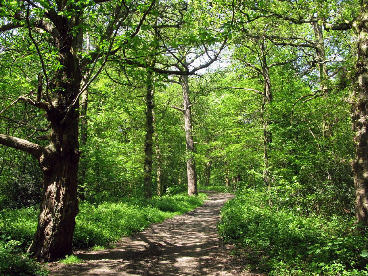 The Canley Woodlands (Park Wood & Ten Shilling Wood) large photo 1