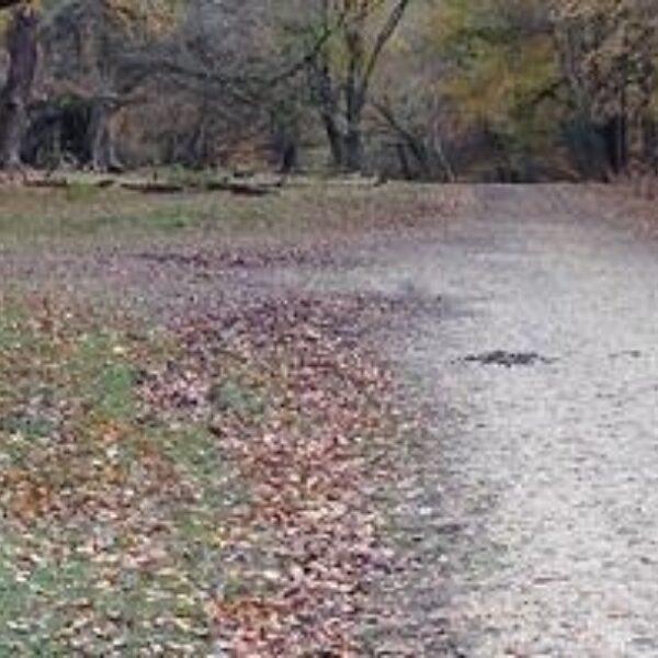 Dog walk at The Crown Stirrup Pub Circular Forest Walk