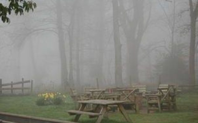 The Crown Stirrup Pub Circular Forest Walk Dog walk in Hampshire
