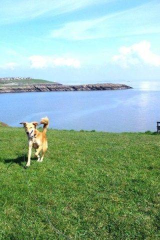 Dog walk at The Knap photo