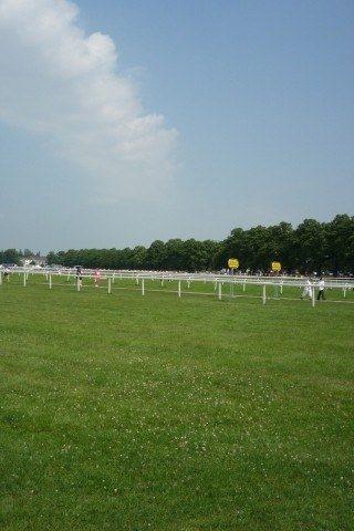 Dog walk at The Knavesmire (York Racecourse) photo