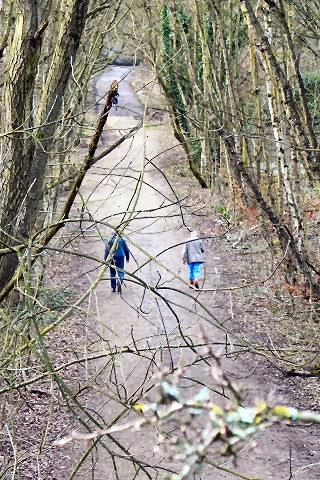 Dog walk at The Loopline, Tyldesley photo