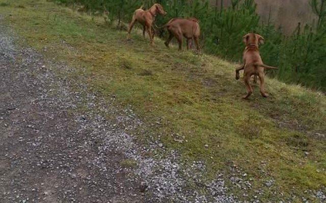 The Mast Dog walk in Rhondda Cynon Taff