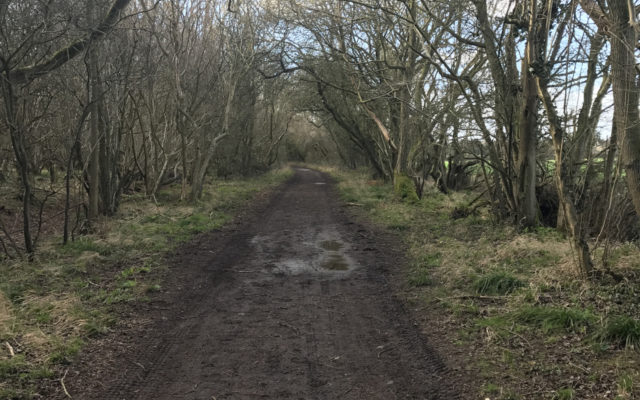 The Outskirts of Elmdon Dog walk in Essex
