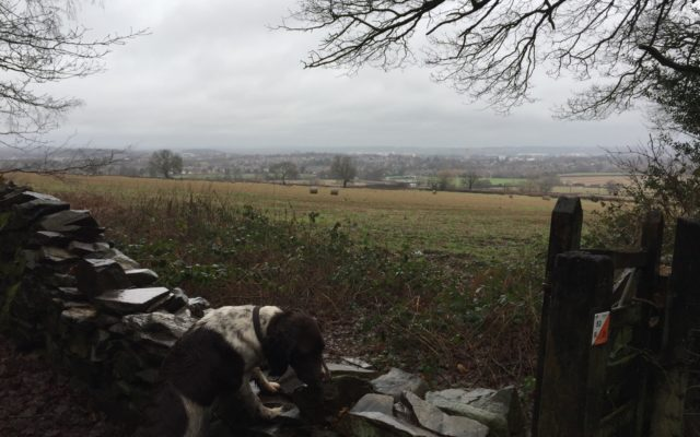 The Outwoods Dog walk in Leicestershire
