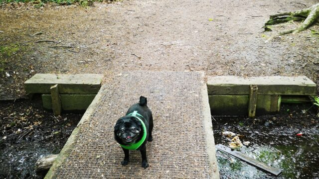 Dog walk at The Pinewoods and Woodhall Spa