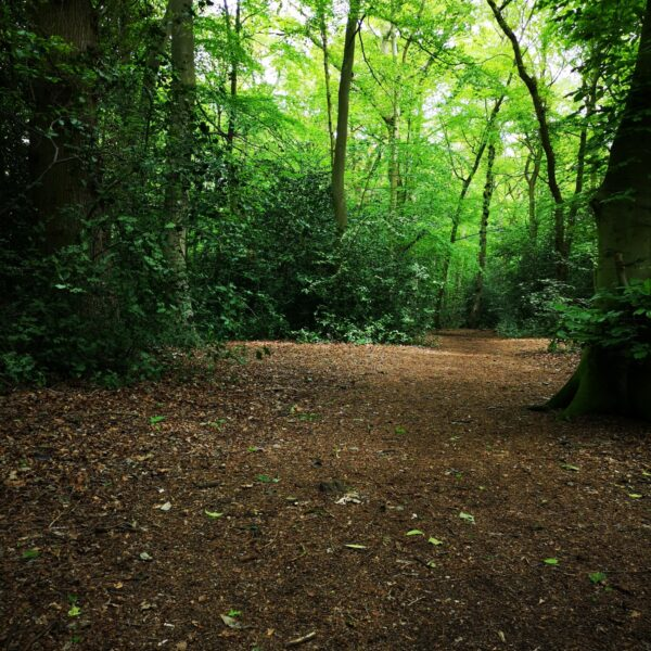 The Pinewoods and Woodhall Spa photo 6