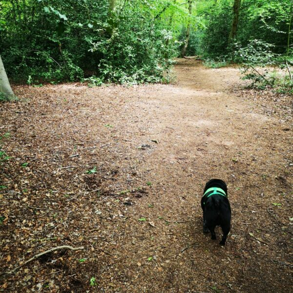 The Pinewoods and Woodhall Spa photo 5