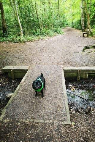 Dog walk at The Pinewoods and Woodhall Spa photo