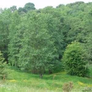 The Quinta Lovell Arboretum and Swettenham Meadows