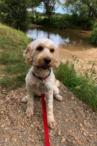 Dog walk at The Throop Loop photo