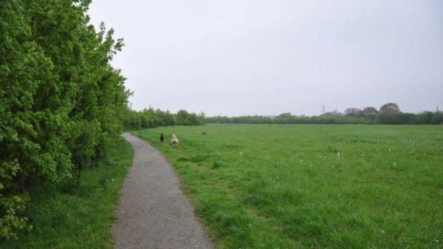 Dog walk at The Wick Country Park
