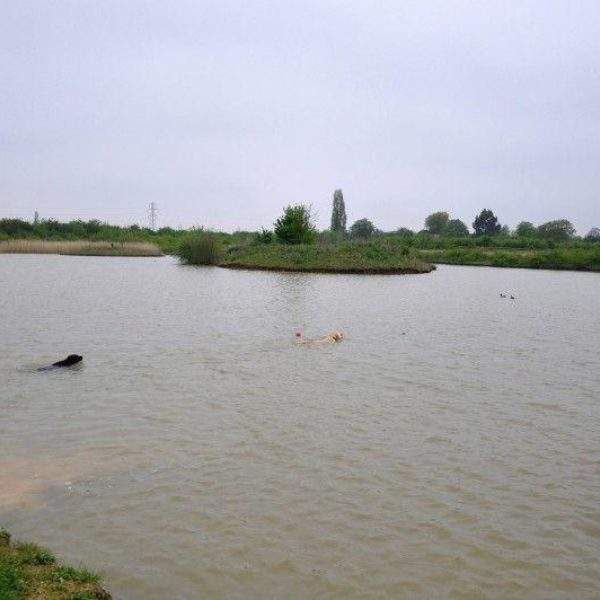 The Wick Country Park photo 6