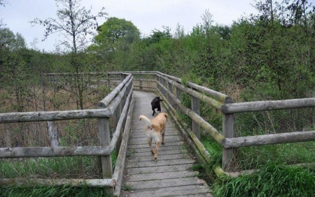 The Wick Country Park Dog walk in Essex