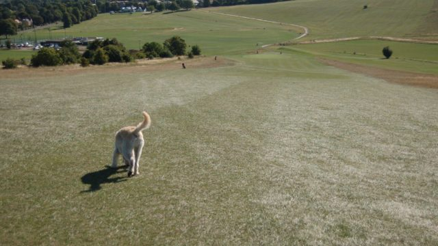 Dog walk at Therfied Heath (Royston)
