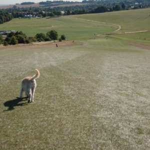 Therfied Heath (Royston)