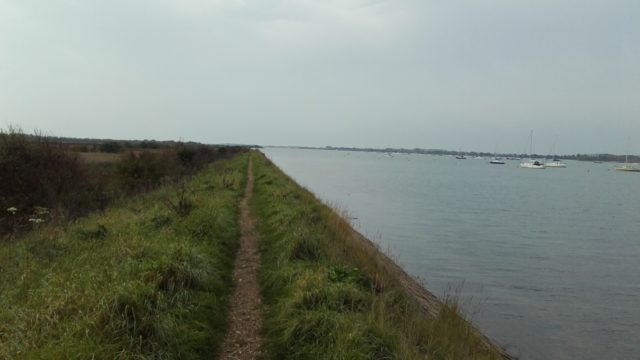 Dog walk at Thorney Island Shoreline Walk