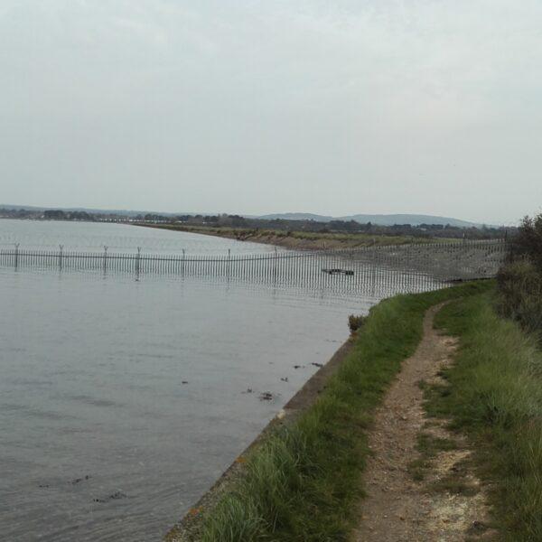 Thorney Island Shoreline Walk photo 4