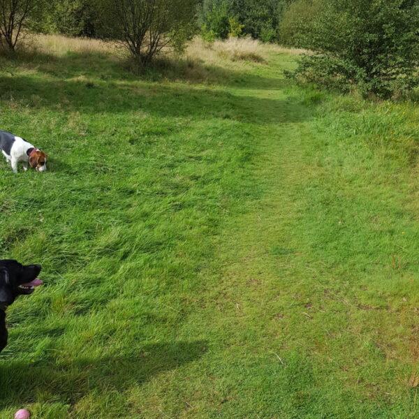 Dog walk at Three Sisters & Viridor Woods walk